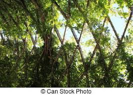 Trellis With Vines Trellis Stock Photos And Images 10 208 Trellis Pictures And