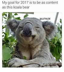 Koala Bear Meme - 25 best memes about koala bear koala bear memes