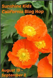 california poppy magnets buggy and buddy