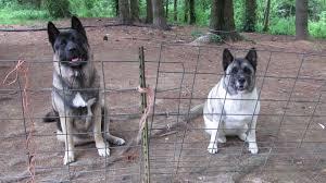 ohiofarmgirl u0027s adventures in the good land how to keep your dog