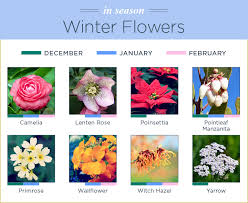 november seasonal flowers what flowers are in season ftd com