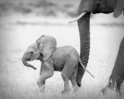 74 best elephant nursery ideas images on pinterest nursery ideas