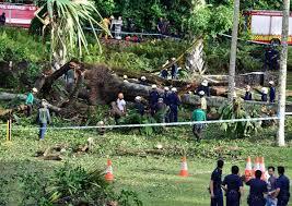 Botanical Gardens In Singapore by 1 Killed 4 Injured After Huge Tembusu Tree Falls At Botanic