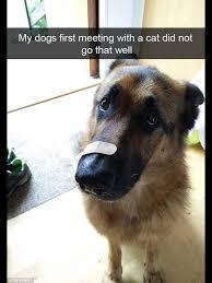 Cat And Dog Memes - dog memes dump album on imgur