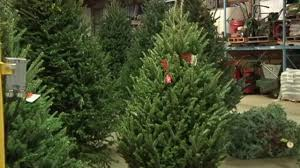 christmas tree recycling runs through jan 17 in chicago