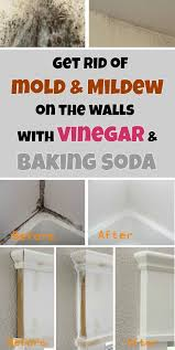 best bathroom cleaner for mold and mildew get rid of mold mildew on the walls with vinegar and baking soda
