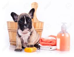 dog grooming images u0026 stock pictures royalty free dog grooming