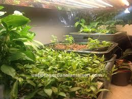 indoor vegetable garden let u0027s invent a universe together part 2