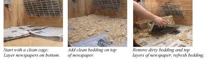 Newspaper Bedding Guinea Pig Care And Gifts Cavymadness