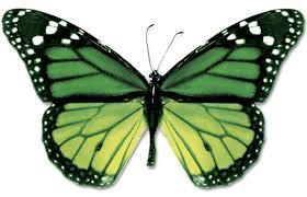 butterflies lessons tes teach