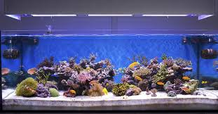 Fish Decor For Home Home Fish Aquarium For Home