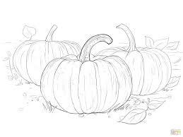 coloring pages pumpkins coloring sheets pumpkin patch coloring
