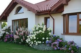 landscaping with hydrangeas 15 garden design ideas