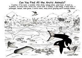 harp coloring page printable coloring book arctic animals coloring pages ice floe