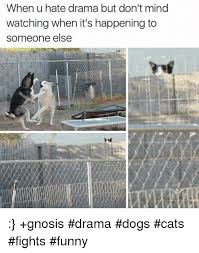 Dog Cat Meme - when u hate drama but don t mind watching when it s happening to