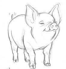 coloring pages breathtaking pig pictures to draw how animals