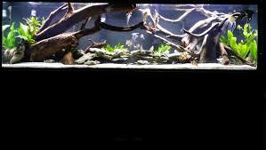 national geographic aquarium light national geographic aquarium light 48 best aquarium 2018