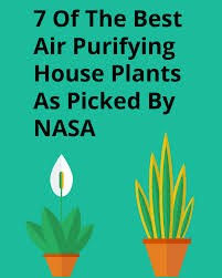 7 of the best air purifying house plants as picked by nasa u2013 clean