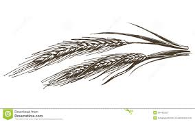 wheat rye bread on a white background sketch stock illustration