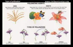 Reproduction In Flowering Plants - reproduction in flowering plants general science notes