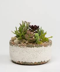 succelents succulent garden delivery philadelphia voted best in philly