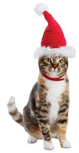 holiday gift ideas for your kitty cat and its loyal owner