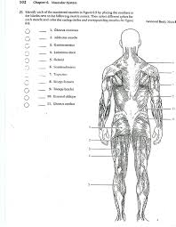 anatomy coloring book chapter 10 blood answers anatomy and