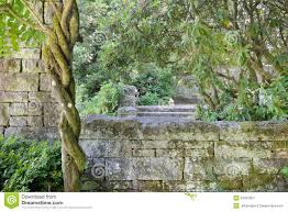 stone wall with moss and climbing plants stock photo image 63870018