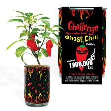 ghost chili p37 the home depot