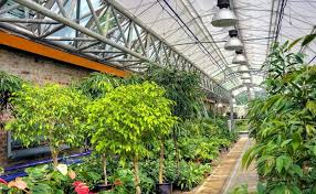 types of grow lights the pros and cons of the different types of grow lights available