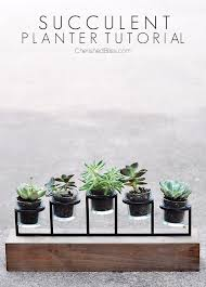 diy succulent diy succulent planter tutorial cherished bliss