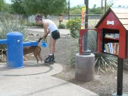 tiny dog themed library in scottsdale makes it easy to get new