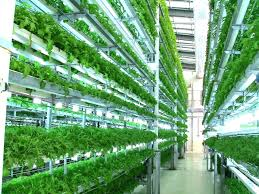 indoor hydroponic gardening systems ayebeeindoor garden irrigation
