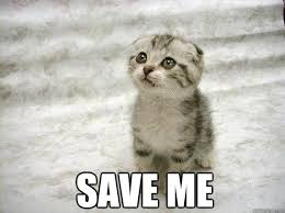 Save Me Meme - save me begging kitty quickmeme