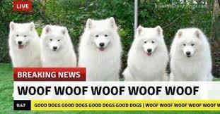 Breaking News Meme - dopl3r com memes live com breaking news woof woof woof woof
