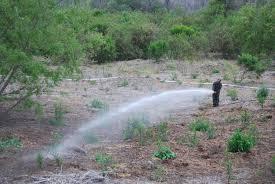 recon native plants plant regimen re establishes natural vegetation u003e los angeles