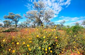 native plants australia list australian wildlife conservancy