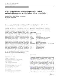 effect of phytoplasma infection on metabolite content and