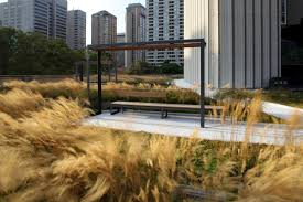 nathan phillips square podium roof garden plant architect inc