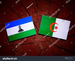 Algerian Flag Lesotho Flag Algerian Flag On Tree Stock Foto 708730678 Shutterstock