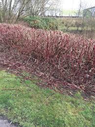 garden hedges and hedging information blog