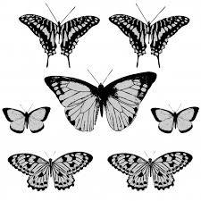 butterfly clipart free stock photo domain pictures