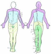 Nerves In The Knee Anatomy Low Back And Leg Pain Is Lumbar Radiculopathy Leg Pain Sciatica