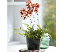 Artificial Orchids Potted Orchid And Ferns Bloom Artificial Flowers