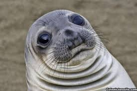 Awkward Seal Meme - worried seal is the new meme that perfectly sums up your life
