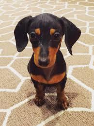 dog friendly decor interior design blog how to