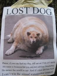 Lost Dog Meme - 19 hilarious lost pet fliers gallery smosh