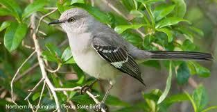 Backyard Wild Birds by Texas Wild Birds Wild Bird Co Bird Feeding Watching Tx