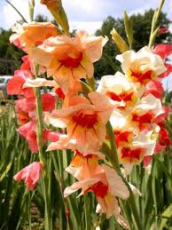 Pretty Types Of Flowers - heat loving bulbs u2013 types of flower bulbs for climates bulbs