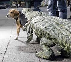 White Dog Halloween Costume Diy Dog Halloween Costumes Romp Italian Greyhound Rescue Chicago